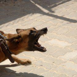 útočící pes