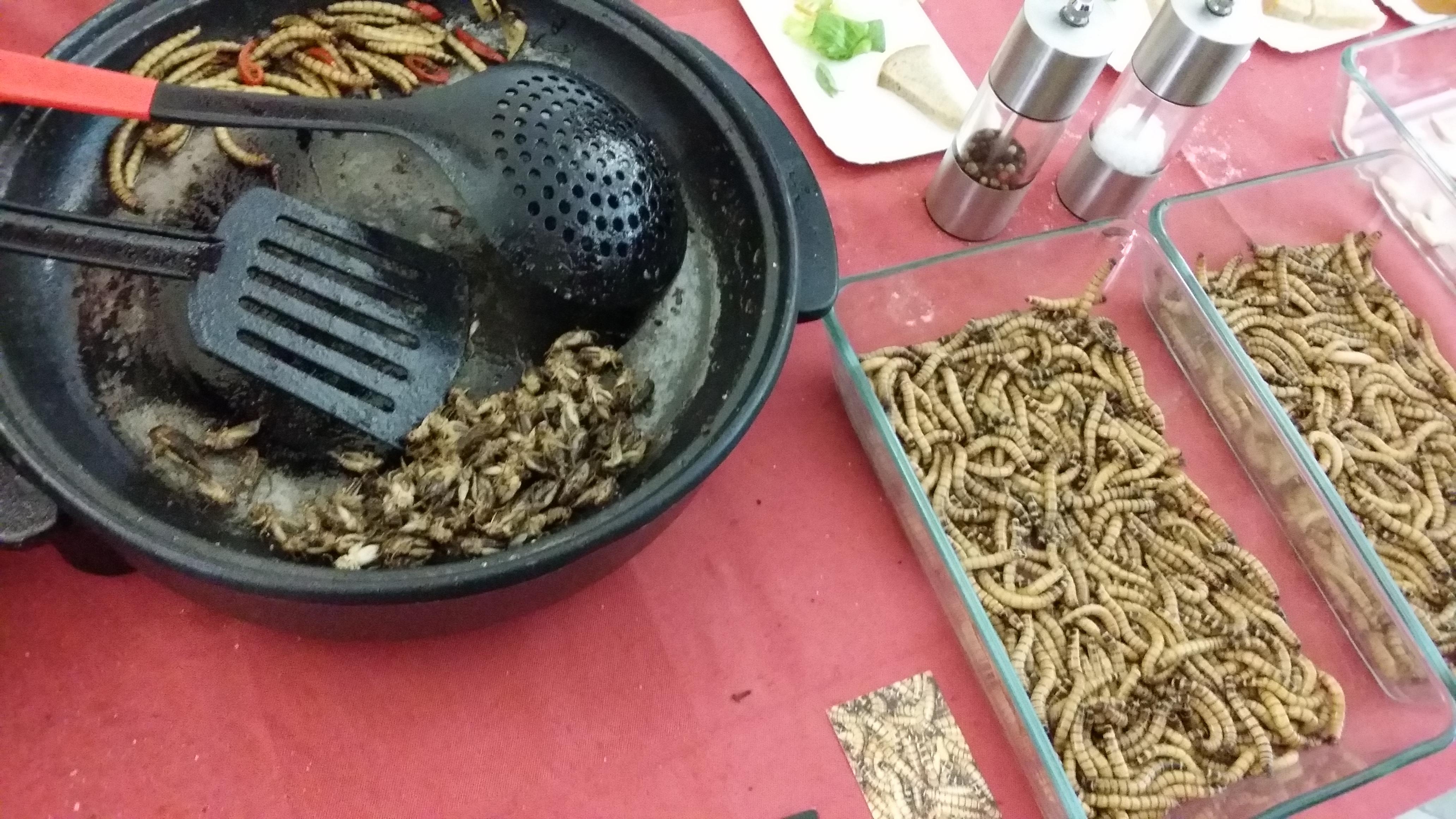 Smažení červi na Barcampu