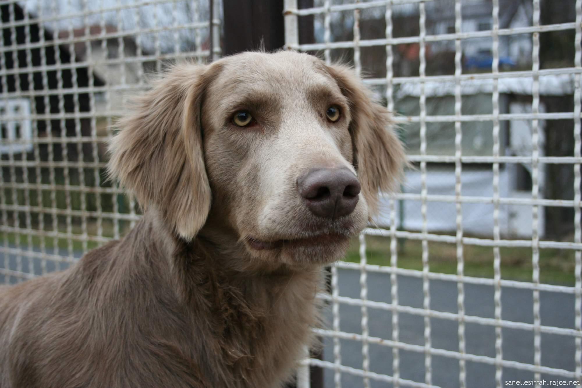 Omezení volného pohybu psů v hlavním městě má platit od počátku listopadu