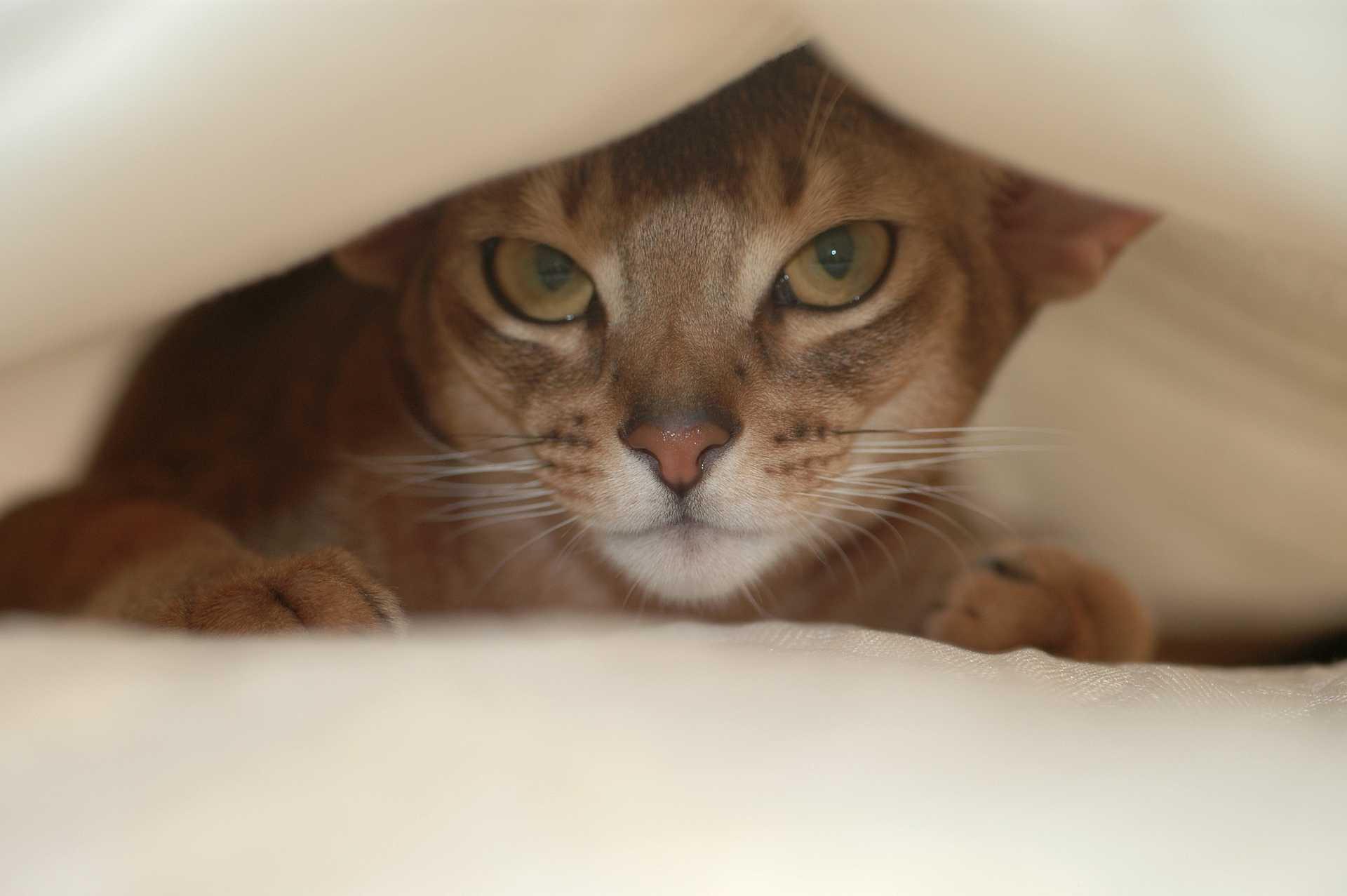Vylekaná kočka se obvykle schová někam, odkud vidí do okolí.