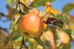 Vyrobte si vlastní sběrač ovoce! Návod krok za krokem