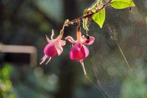 5 tipů, jak zabránit invazi pavouků do vašeho domova