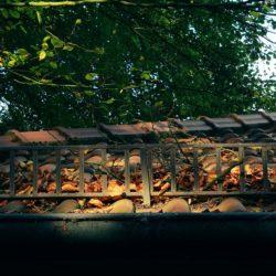 střecha plná listí