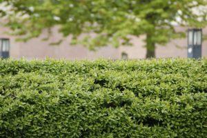 Praktické tipy pro úpravu živého plotu