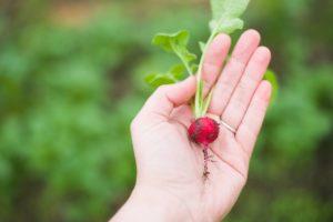LOKÁLNÍ POTRAVINY: čerstvé plody upevní vaše zdraví
