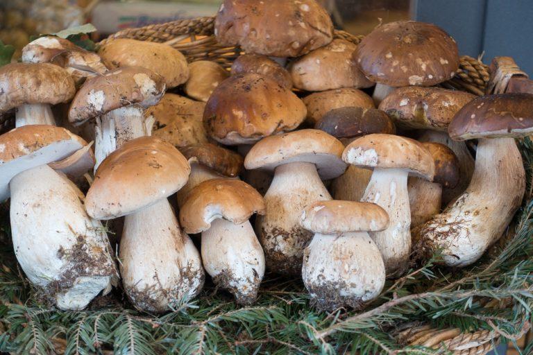 Как посолить грибы в домашних условиях вкусно