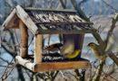 DIY: Krmítko za oknem: přírodní divadlo okouzlí malé i velké