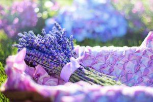 Levandule: voňavý poklad pro uvolnění i silné zdraví