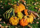 Jak si ulehčit podzim na zahradě