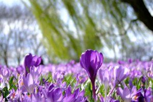 Zahrada v listopadu: sazenice a příprava na jaro