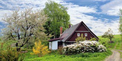Kácení stromů v zahradě: kdy je potřeba povolení