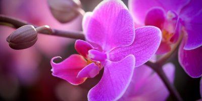 Pěstování orchidejí: květy po celý rok