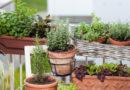 Vytvořte si bylinkovou zahrádku na parapetu nebo na balkóně