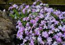 Popínavé rostliny zkrášlí každý kout vaší zahrady! Zaberou minimum prostoru a přinesou velký efekt