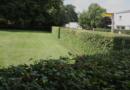 Tipy pro krásný živý plot. Jak rozdělit zóny v zahradě a ozvláštnit ji?