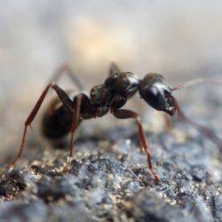Mravenci - postrach každého domova. Zbavte se jich rychle a účinně!