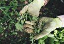 Zkuste vaše vlastní domácí prostředky na hubení plevele!